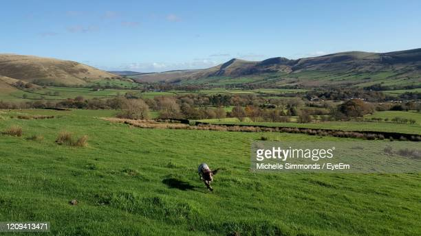 scenic view of agricultural field against sky - field stock pictures, royalty-free photos & images