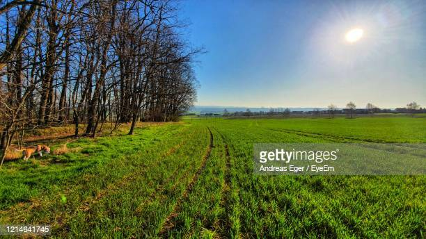scenic view of agricultural field against sky - andreas solar stock pictures, royalty-free photos & images
