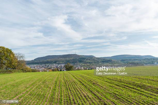 scenic view of agricultural field against sky - baden württemberg stock pictures, royalty-free photos & images