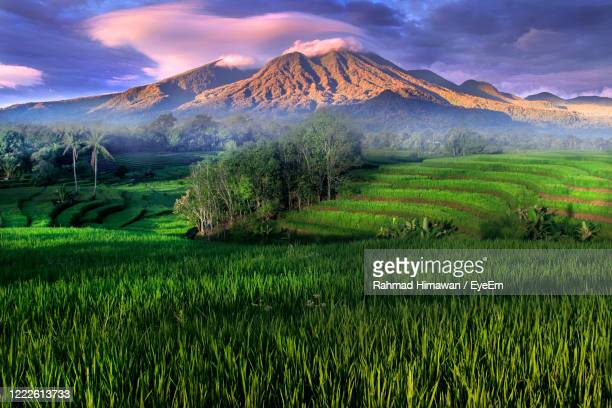 scenic view of agricultural field against sky - rahmad himawan stock pictures, royalty-free photos & images