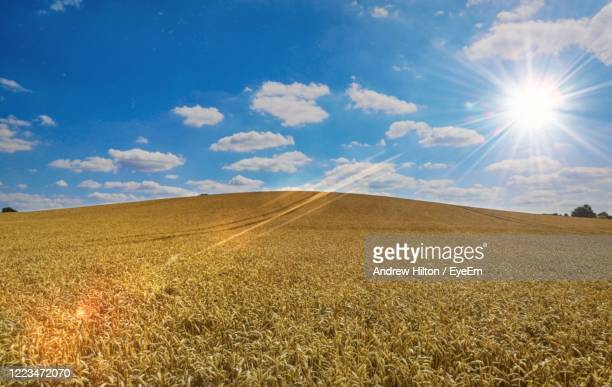 scenic view of agricultural field against sky - northampton stock pictures, royalty-free photos & images