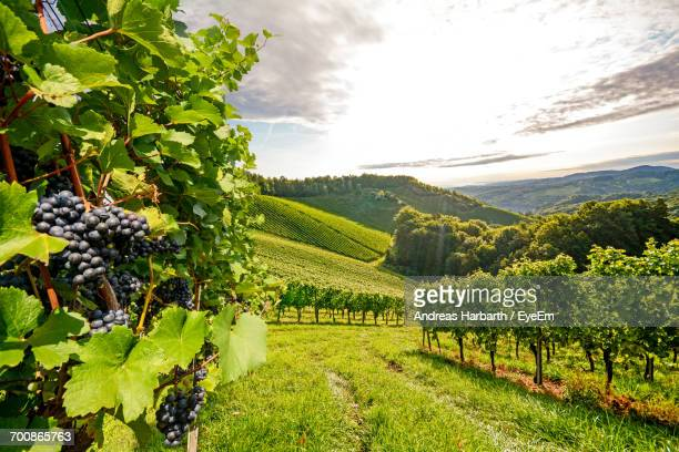 scenic view of agricultural field against sky - veneto stock pictures, royalty-free photos & images