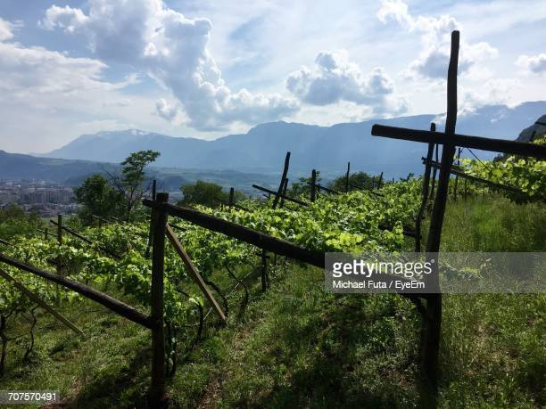scenic view of agricultural field against sky - futa stock photos and pictures