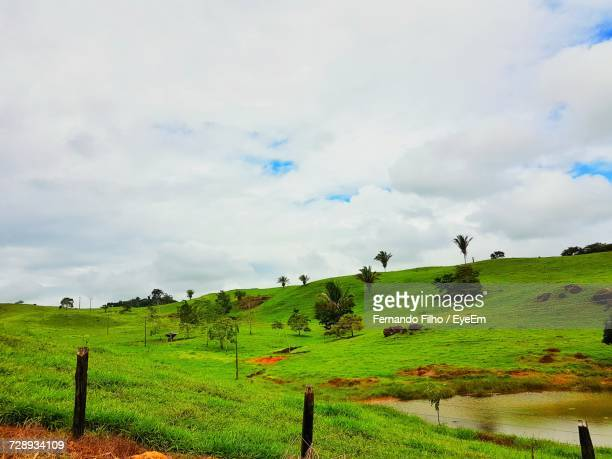 scenic view of agricultural field against sky - filho stock pictures, royalty-free photos & images