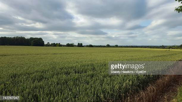 scenic view of agricultural field against sky - gillingham stock pictures, royalty-free photos & images