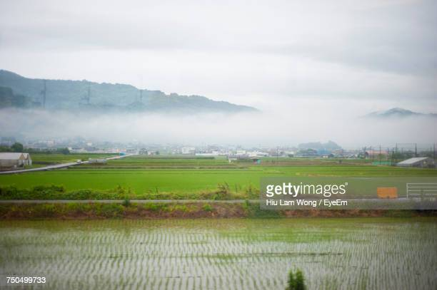 scenic view of agricultural field against sky - matsuyama ehime stock pictures, royalty-free photos & images