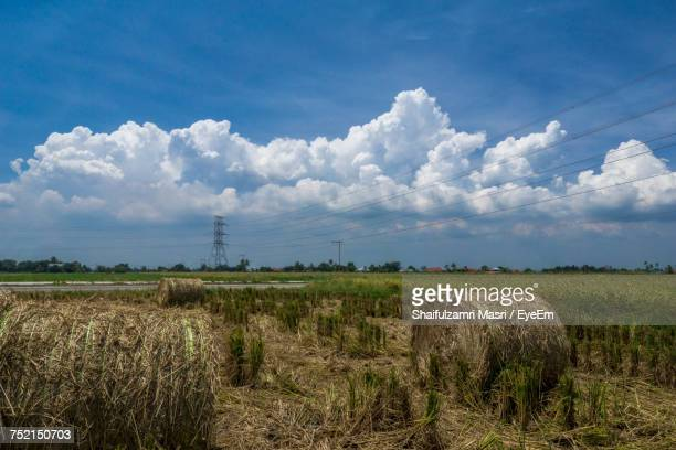 scenic view of agricultural field against sky - shaifulzamri eyeem stock pictures, royalty-free photos & images