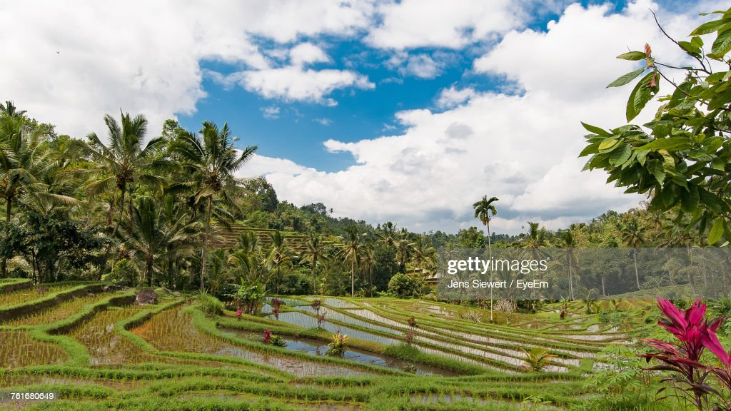 Scenic View Of Agricultural Field Against Sky : Stock-Foto