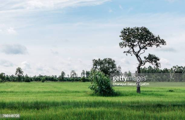 scenic view of agricultural field against sky - chanayut stock photos and pictures