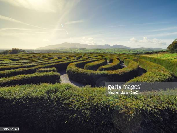 scenic view of agricultural field against sky - maze stock photos and pictures