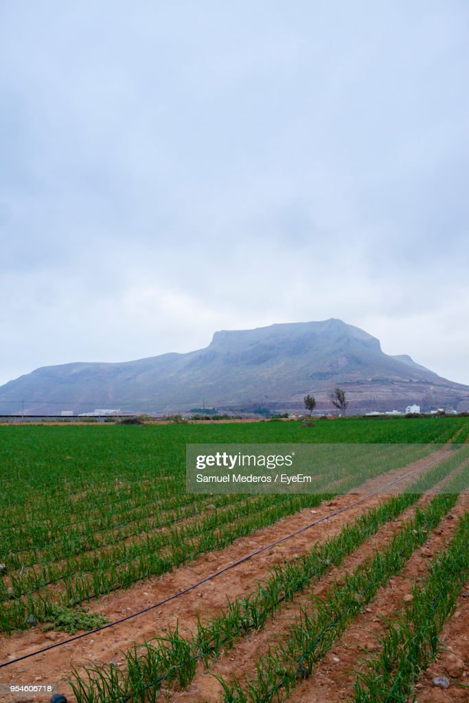 Scenic View Of Agricultural Field Against Sky : Foto de stock