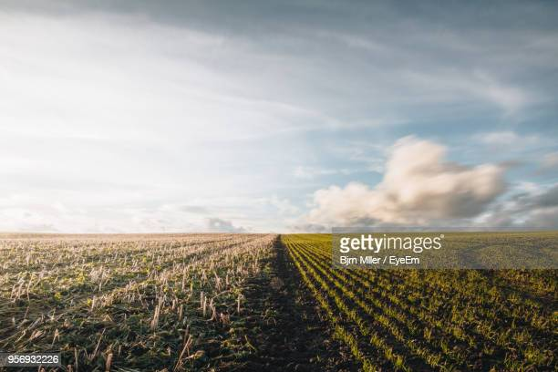 scenic view of agricultural field against sky - feld stock-fotos und bilder