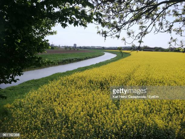 scenic view of agricultural field against sky - casapiccola stock-fotos und bilder