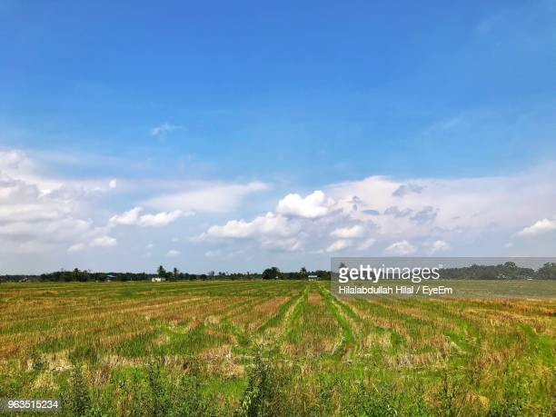 scenic view of agricultural field against sky - hilal stock photos and pictures