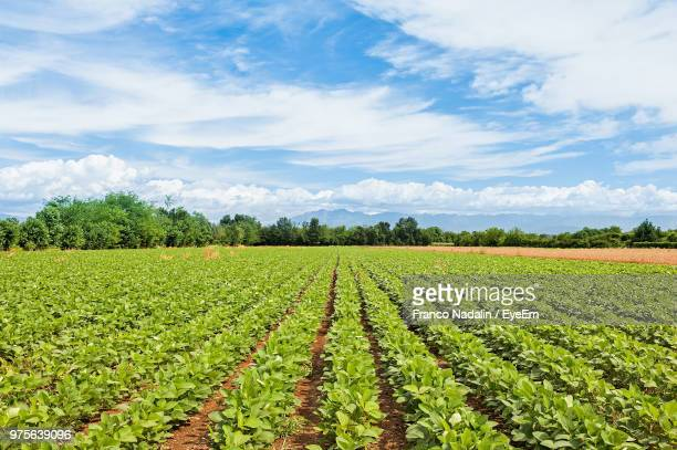 scenic view of agricultural field against sky - soybean stock pictures, royalty-free photos & images