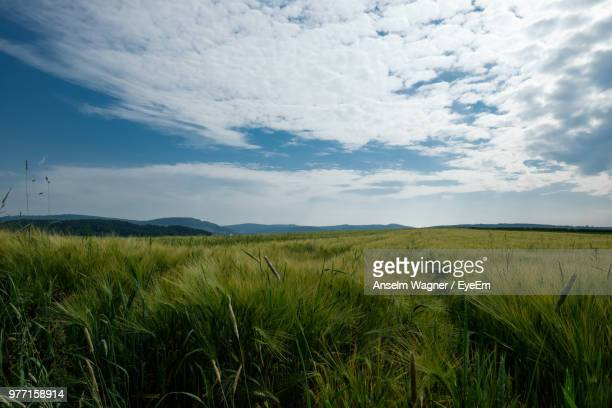 scenic view of agricultural field against sky - ヘッセン州 ストックフォトと画像
