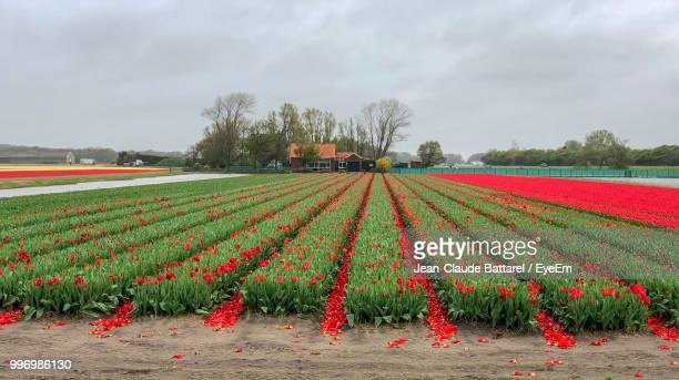 scenic view of agricultural field against sky - gelderland stock pictures, royalty-free photos & images