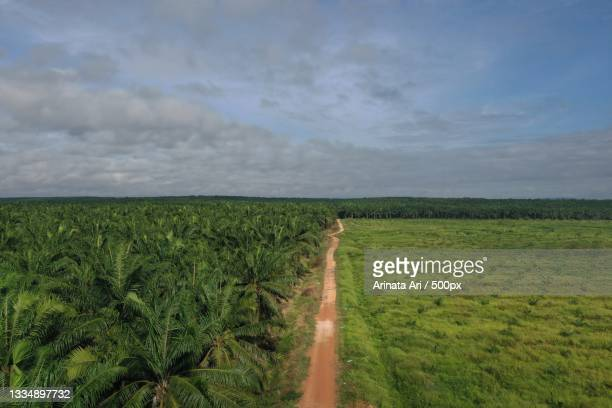 scenic view of agricultural field against sky,kalimantan tengah,indonesia - central kalimantan stock pictures, royalty-free photos & images