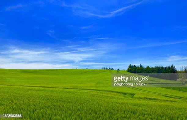 scenic view of agricultural field against sky,umpferstedter weg a,weimar,germany - weg bildbanksfoton och bilder