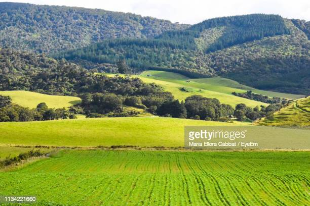 scenic view of agricultural field - southland new zealand stock pictures, royalty-free photos & images