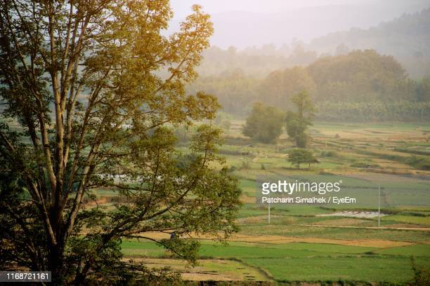 scenic view of agricultural field - thai mueang photos et images de collection