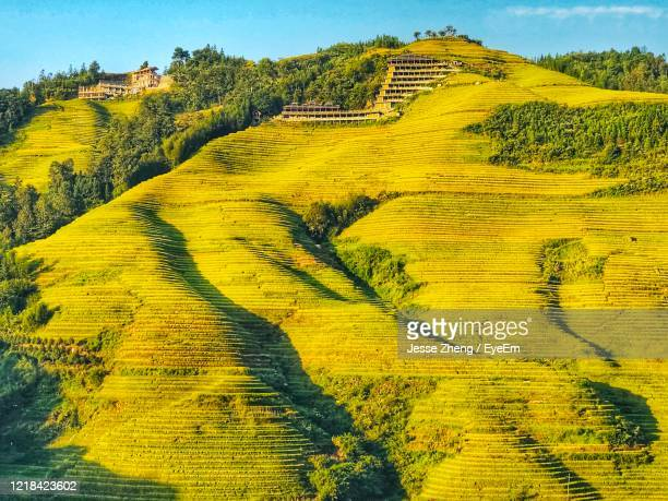 scenic view of agricultural field - jesse stock pictures, royalty-free photos & images