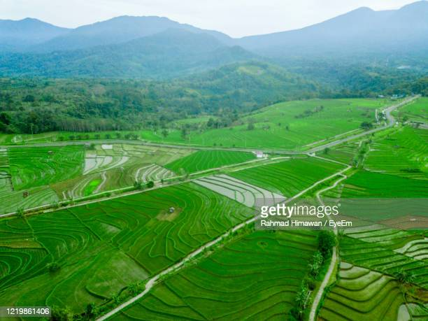scenic view of agricultural field - rahmad himawan stock pictures, royalty-free photos & images