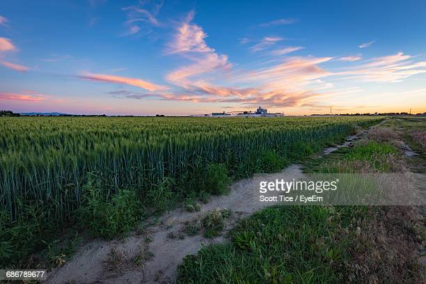 scenic view of agriculture field against sky during sunset - idaho falls stock photos and pictures
