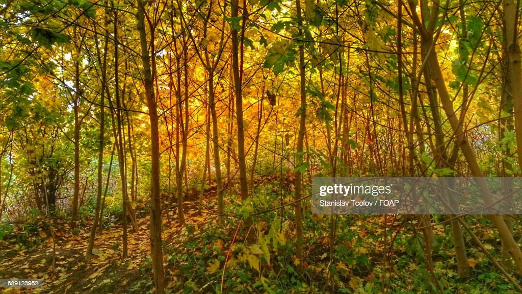 Scenic view of autumn forest : Foto de stock
