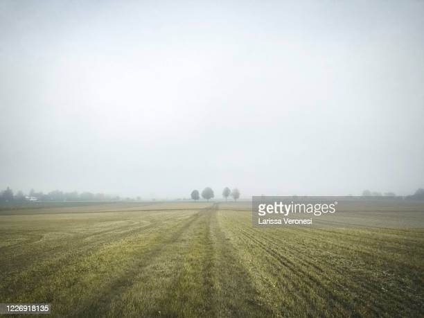 scenic view of autumnal field with trees and fog - larissa veronesi stock-fotos und bilder