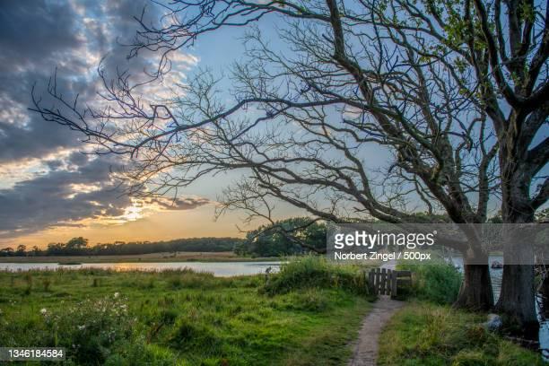 scenic view of bare trees against sky - norbert zingel stock-fotos und bilder