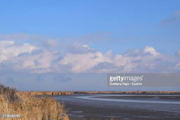 scenic view of beach against blue sky - svetlana stock photos and pictures