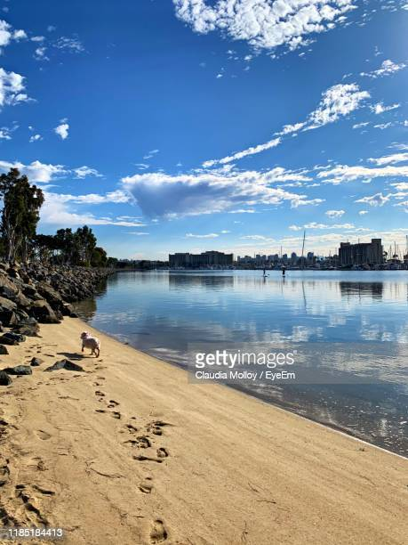 scenic view of beach against blue sky - sandy molloy stock pictures, royalty-free photos & images