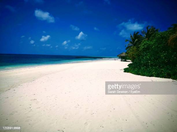scenic view of beach against blue sky - sarah sands stock pictures, royalty-free photos & images