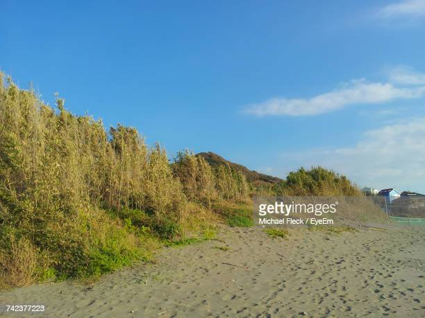 scenic view of beach against blue sky - zushi kanagawa stock photos and pictures