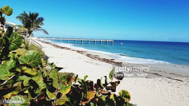 scenic view of beach against clear blue sky - vero beach stock pictures, royalty-free photos & images