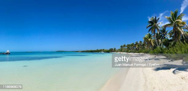 scenic view of beach against clear blue sky - cancun stock pictures, royalty-free photos & images