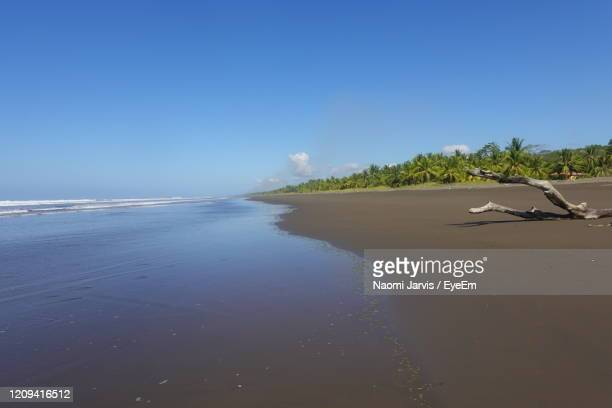 scenic view of beach against clear blue sky - naomi jarvis stock pictures, royalty-free photos & images