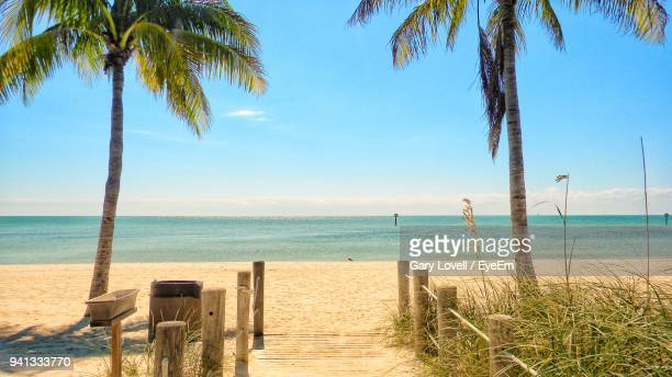 scenic view of beach against clear blue sky - golfküstenstaaten stock-fotos und bilder