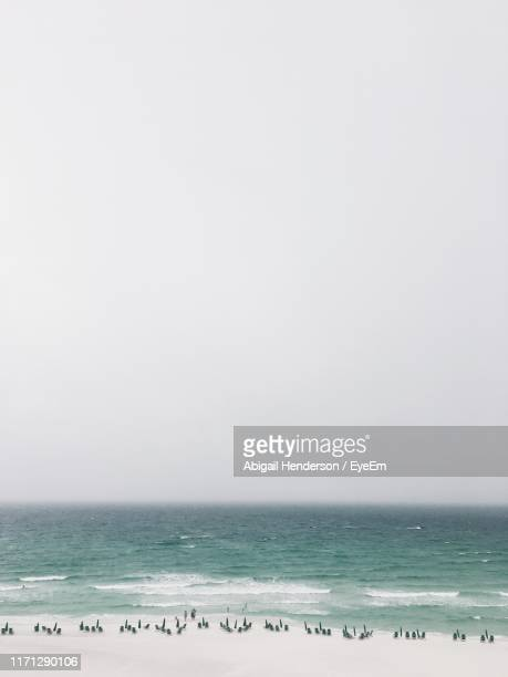 scenic view of beach against clear sky - destin beach stock pictures, royalty-free photos & images
