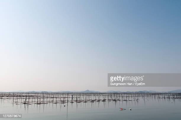 scenic view of beach against clear sky - gwangju stock pictures, royalty-free photos & images