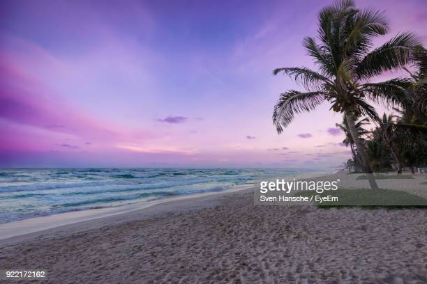 scenic view of beach against sky during sunset - tulum mexico stock photos and pictures