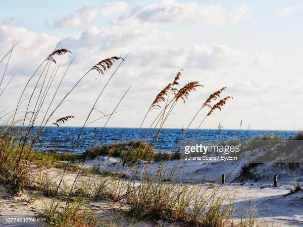 scenic view of beach against sky - gulf shores alabama stock pictures, royalty-free photos & images