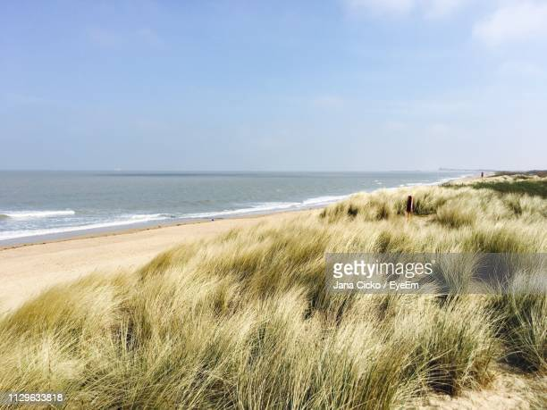 scenic view of beach against sky - belgium stock pictures, royalty-free photos & images