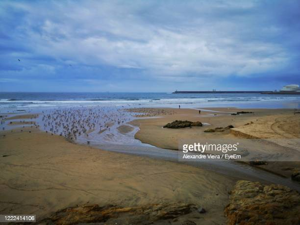 scenic view of beach against sky - alexandre coste foto e immagini stock