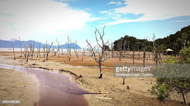 scenic view of beach against sky - bako national park stock pictures, royalty-free photos & images