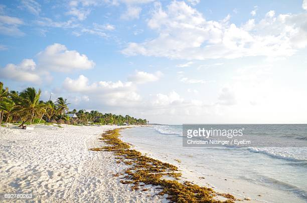 scenic view of beach against sky - tulum mexico stock photos and pictures