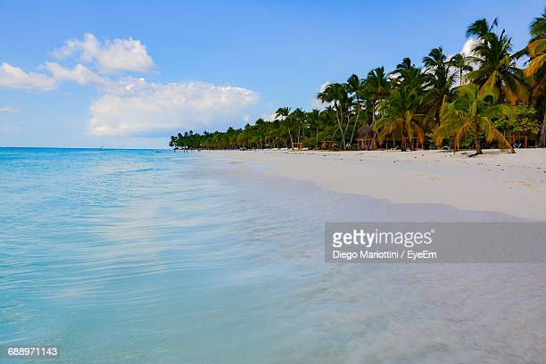 Scenic View Of Beach By Palm Trees Against Cloudy Sky
