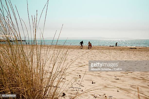 scenic view of beach - albrecht schlotter stock photos and pictures
