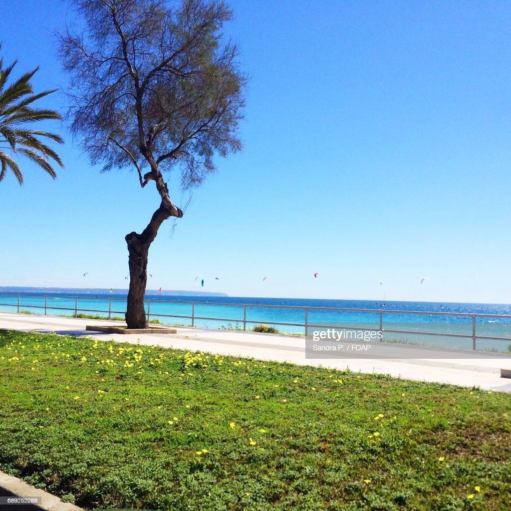 Scenic view of beach : Stock Photo